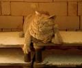 Kiln Cat